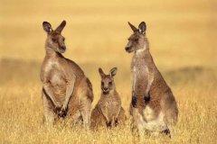 澳大利亚3年多次签证,不限领区,全国受理